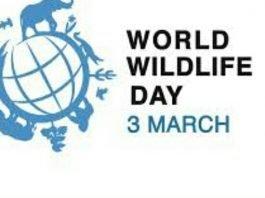 """3 मार्च """"World Wildlife Day 2021"""" पूरी दुनिया में विश्व वन्यजीव दिवस कब क्यों और कैसे मनाया जाता है।"""