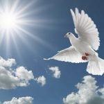"""21 सितंबर """"विश्व शांति दिवस"""" विश्व भर में उड़ाया जाता है सफेद कबूतर क्या है इस दिन का महत्व"""